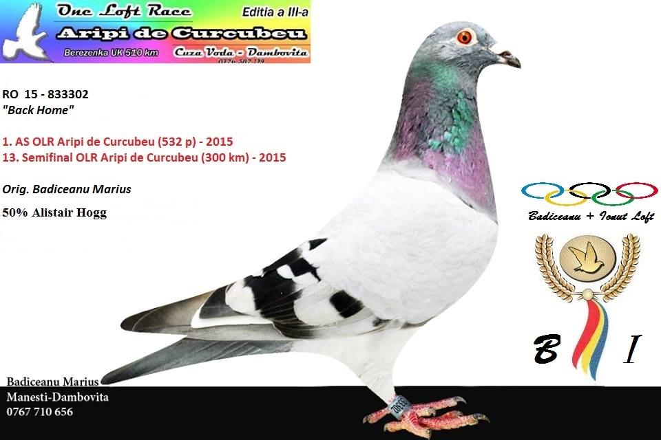 1st Ace pigeon