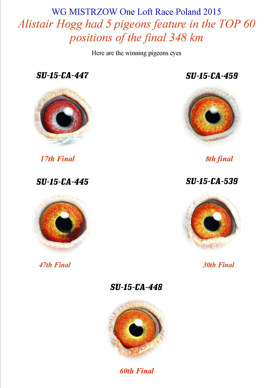 wg-mistrzow-final-eyes